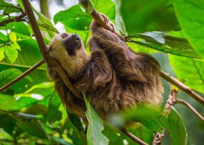 sloth-playa-negra